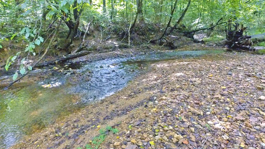 Free flowing Lick Creek through the property