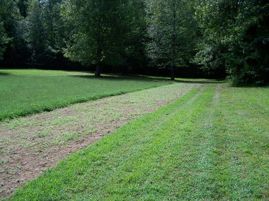 Additional view of a food plot